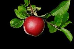 Refeição matinal com maçãs. Fotografia de Stock Royalty Free