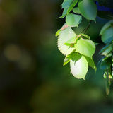 Refeição matinal da árvore Foto de Stock Royalty Free