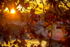 Refeição matinal da árvore no fundo do sol Fotografia de Stock Royalty Free
