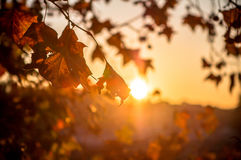 Refeição matinal da árvore no fundo do sol Imagens de Stock