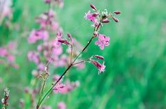 Refeição matinal da flor Foto de Stock Royalty Free
