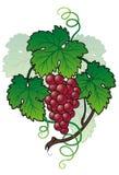 Refeição matinal da uva