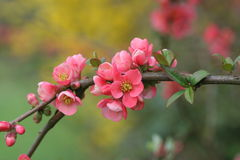 Refeição matinal das flores foto de stock