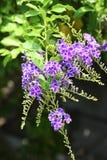 Refeição matinal de flores azuis imagens de stock royalty free
