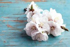 Refeição matinal de florescência da árvore com flores brancas imagens de stock royalty free