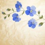 Refeição matinal de florescência da flor Foto de Stock Royalty Free