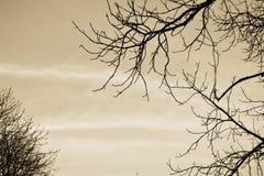 Refeição matinal do céu Imagem de Stock