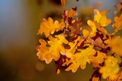 Refeição matinal do outono Imagem de Stock Royalty Free