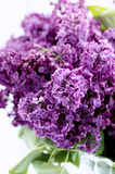 refeição matinal lilás violeta Fotografia de Stock Royalty Free