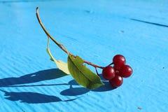 Refeição matinal madura 2 das cerejas Foto de Stock