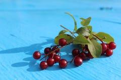 Refeições matinais maduras das cerejas Imagem de Stock Royalty Free