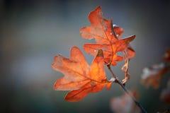 Refeição matinal agradável do outono Imagem de Stock