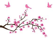 Refeição matinal da cereja Imagem de Stock