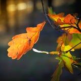 Refeição matinal do outono Fotos de Stock Royalty Free