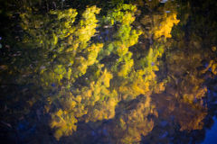 Refelction delle foglie variopinte durante la stagione di caduta di autunno immagine stock