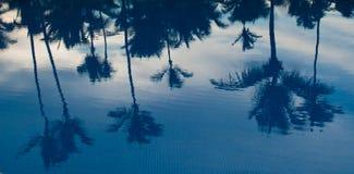 Refelction delle palme nel raggruppamento al tramonto Fotografia Stock