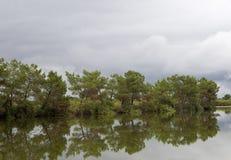 Refelctions των δέντρων Στοκ Εικόνες