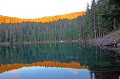 Refelctions of a forest in a lake. Mirror image reflection of a forest in a lake. Serene Lake Oregon Royalty Free Stock Image