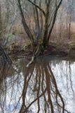 Refelections drzewo w spokojnym forrest stawie Obraz Stock