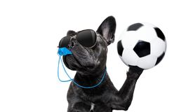 Referee dog with whistle Stock Photos