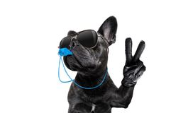 Referee dog with whistle Royalty Free Stock Photos