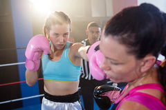 Referee looking at female boxers fighting in boxing ring Royalty Free Stock Photography