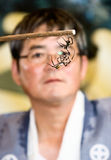 A referee watching two spiders fight. Kajiki, Kagoshima prefecture, Japan, June 15, 2008, A referee watches two St. Andrew's Cross spiders fighting at the Kajiki royalty free stock images