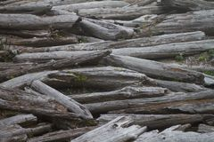 Driftwood Logjam at the Beach. This is a reference photo of a log jam at the beach Stock Images