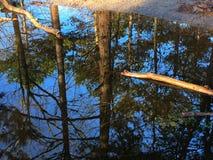 reflété Photo libre de droits