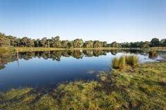Reflétez l'étang naturel lisse dans un paysage rural Photos libres de droits