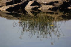 Reflaction в воде Стоковые Фотографии RF