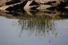 Reflaction en agua Fotos de archivo libres de regalías