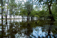 Reflect of flooding in Niyang park Stock Photos