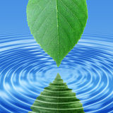 Reflect green leaf in blue water Royalty Free Stock Photos