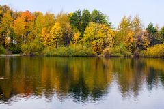 Reflected. Autumn trees reflected in water Stock Images