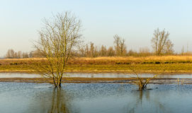 Reflected bare trees in a rippled water surface Royalty Free Stock Images
