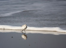 Reflected bird. A photo of a flying bird stock images