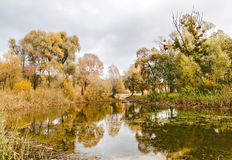 Reflected in a forest lake autumn trees Royalty Free Stock Photos