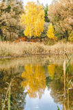 Reflected in a forest lake autumn trees Stock Photos