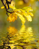 Reflected leaves Stock Photography