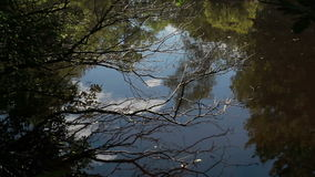 Reflected Pond Surface. The camera is angled upon dead tree branches in front of a pond that reflects the sky above. White clouds can be seen on the water's stock video footage