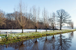 Reflected row of bare trees in wintertime Royalty Free Stock Image