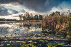 Reflected sky at pristine Clayton Lake. Ontario, Canada Royalty Free Stock Photography