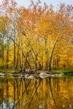 Reflected Splendor Stock Images