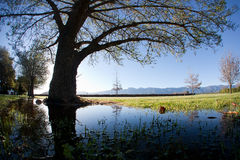 Reflected Spring. Tree reflected in the water in spring, with the mountains in the background Royalty Free Stock Photos