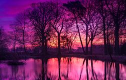 Reflected sunrise through bare winter trees