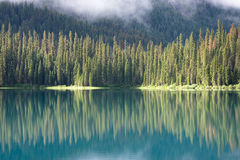 Reflected Trees. Large sunlit fir trees are reflected in the green water of Emerald Lake, Canada Stock Photos
