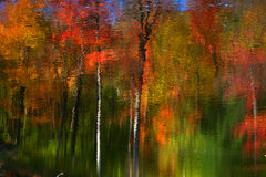 Reflected trees Royalty Free Stock Photo
