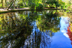 Reflected Trees at London New River Walk. Trees and foliage with reflections in canal water with ripples at the New River Walk, Canonbury, London stock images