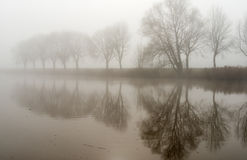 Reflected trees on a misty morning Royalty Free Stock Photos
